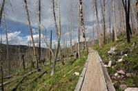 A boardwalk section of the trail in the area burned by the 2002 East Fork Fire.