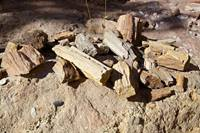 A collection of petrified wood near the dryfall in Huber Wash