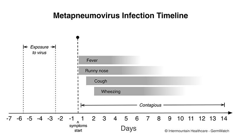Metapneumovirus | Intermountain Healthcare