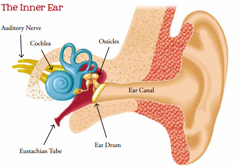 Why Does Ear Ringing Occur
