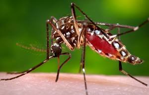 mosquitoes West Nile