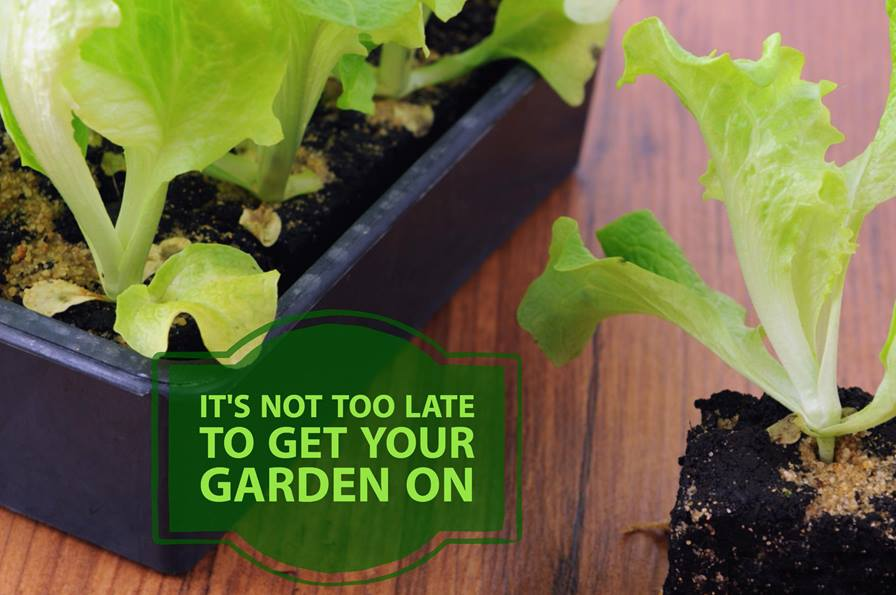 It's Not Too Late to Get Your Garden On