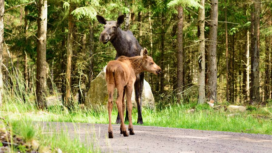 Safety tips for wildlife encounters