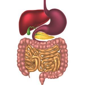 Gastroenterology | Budge Clinic