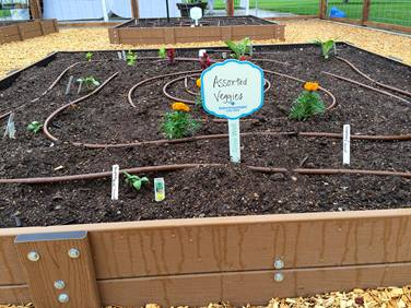 Late spring is the ideal time to get vegetables planted